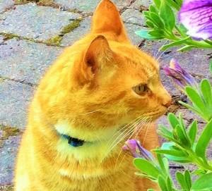 Morris my ginger-boy