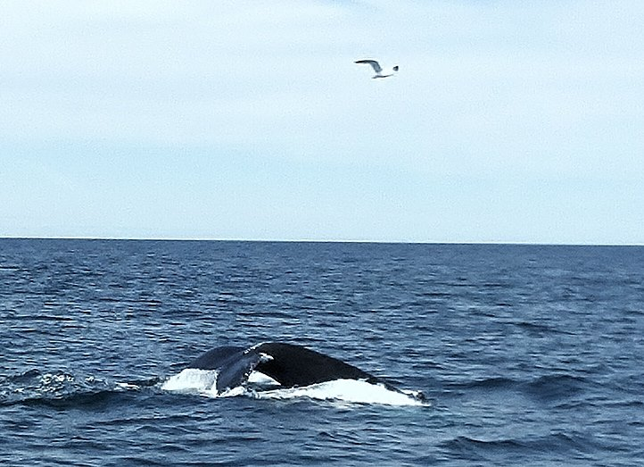 Tale of the whale with a sea gull overhead
