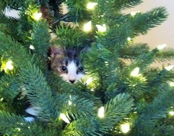 Luna The Christmas Tree Climber