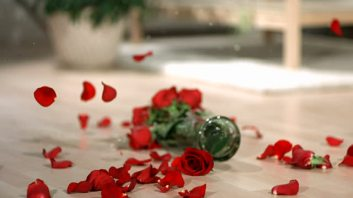 stock-video-15669603-vase-of-red-roses-falling-and-breaking