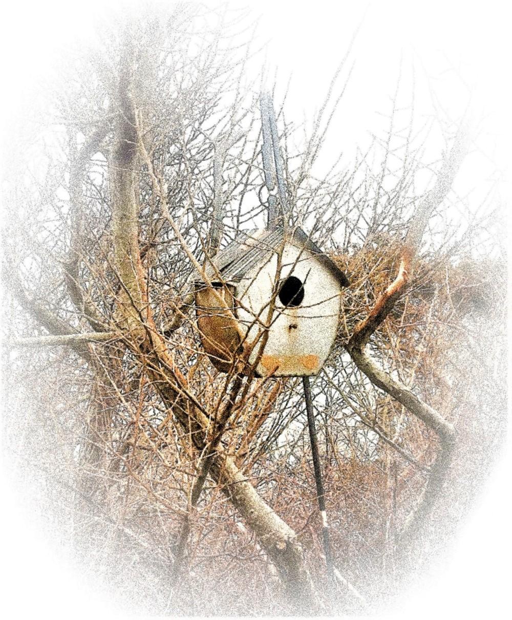Bird House on The Cape
