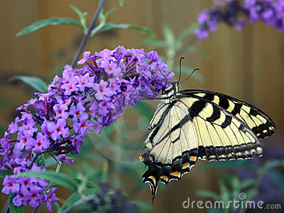 beautiful-butterfly-692537