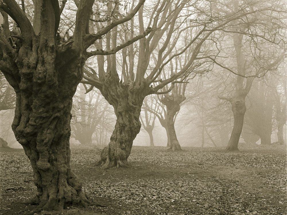haunted-forests-epping-forest-england-Alamy-C7THX0